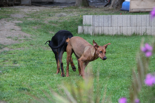Hund Zittert Ständig